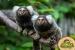 Türlerinin Ender Örneklerinden Dünyanın En Egzotik Canlıları ile Buluşmak İçin Jungle İstanbul'a Giriş Bileti