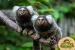 Jungle İstanbul Vialand AVM'de Türlerinin Ender Örneklerinden Dünyanın En Egzotik Canlılarını Keşfetmeye Hazır Olun!