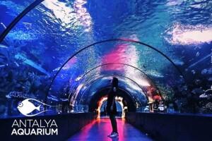 Dünyanın En Büyük Tünel Akvaryumu Olan Antalya Akvaryum Biletleri; Çocuk Bileti 34 TL, Yetişkin Bileti 49 TL