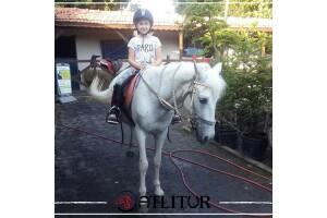 Atlıtur Gümüşdere'den Okullara Yönelik Atları Tanıma ve At Binme
