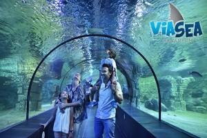 Viasea Akvaryum'un Büyülü Dünyasına Çocuk ve Yetişkinler İçin Giriş Bileti