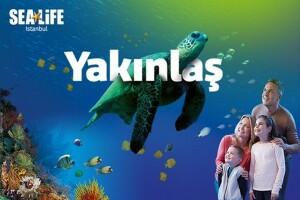 SEA LIFE İstanbul Hafta İçi İndirimli Giriş Bileti